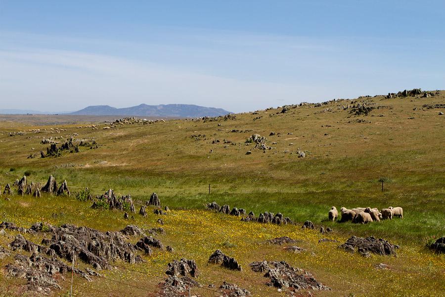Landschap van la Serena